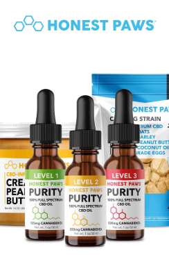 CBD Oil For Dogs Purity Level 2