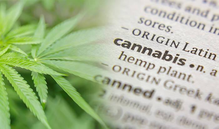 CBD Cannabis glossary