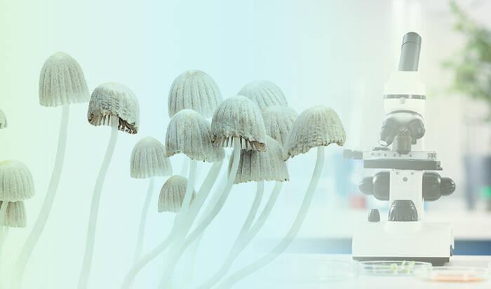 What are magic mushrooms and psilocybin