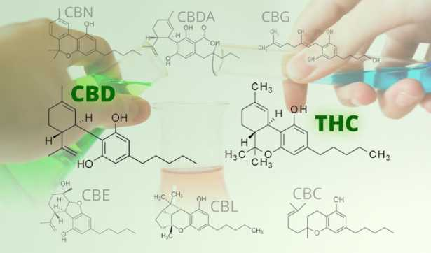 The Chemical Breakdown of Cannabis