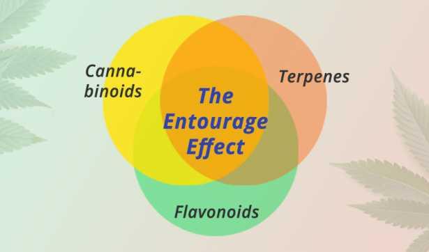 Entourage Effect of Cannabidiol (CBD)